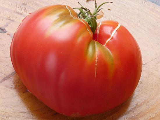 Ladistroy tomate rose coeur de boeuf slankard - Planter des tomates coeur de boeuf ...